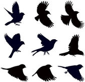 Silhouettes of birds — Vector de stock