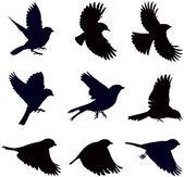 Silhouettes of birds — Stock Vector