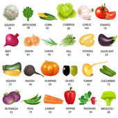 Set vegetable with calories on white — Vector de stock