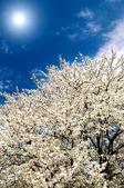 Beautiful,colorful bush blossom. — Stock Photo