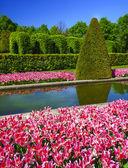 Tulip gardens in the Keukenhof.  — Stock Photo