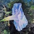 Bindweed violet and blue flower - Stock Photo