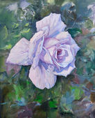 Beautiful violet rose — Stock Photo