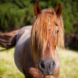 Stock Photo: Graceful horse