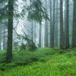 Wet forest in the fog - Stock Photo