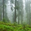 Mist and forest - Stock Photo
