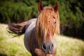 Graciösa häst — Stockfoto