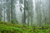 Mist and forest — Stock Photo