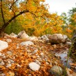 Colorful autumn — Stock Photo