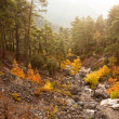 Misty autumn morning in mountains — Stock Photo