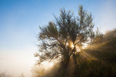 光束在雾的早晨 — 图库照片