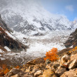 Stock Photo: Autumn in Glacier