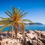 Lone palm tree — Stock Photo #44450059