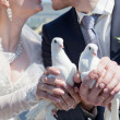 Two white pigeons in hands at the newly-married couple — Foto de Stock