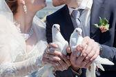 Två vita duvor i händerna på den nyligen gift par — Stockfoto