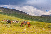 Horses against mountains — Stock Photo