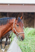 Koń jest siano ich koryta — Zdjęcie stockowe