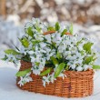 Greater basket with snowdrops costs in a snow — Stock Photo