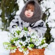 Little girl in a winter wood with the big basket of snowdrops - Stockfoto