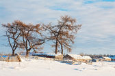 Winter landscape Solovetsky Islands Russia — Stock Photo