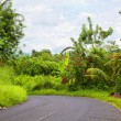 Stock Photo: Asphalted way paved through jungle
