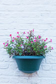 Flower in a cache-pot on a brick wall — Stock Photo