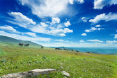 Mountain Altai. A beautiful landscape with horse and the blue sky — Stock Photo
