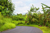 Asphalted way paved through the jungle — Stockfoto