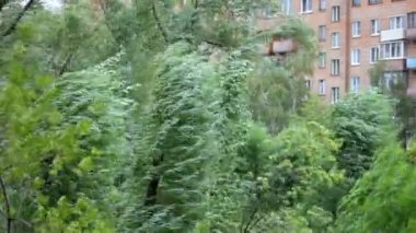Strong wind swings trees against the multi-storey building — Stock Video