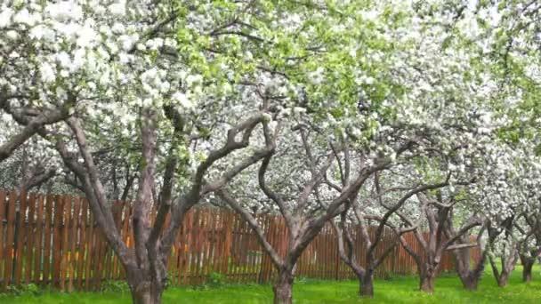 Фото молодого квітучого саду фото 744-912