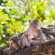 Family of monkeys sits on a tree against foliage - Stock Photo