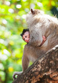 Cub of a monkey with mother sits on a tree branch against foliage — Stock Photo