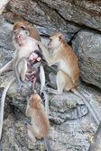 Famille de singes se trouve sur le rocher — Photo