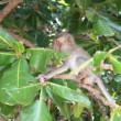 One little white monkey on tree — Stock Video
