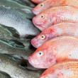 Fresh-caught sea fish on a counter in the fish market - Stock Photo