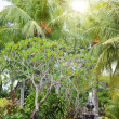 Fountain under palm trees in a tropical garden - Stock Photo