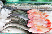 Fresh-caught sea fish on a counter in the fish market — Stock Photo