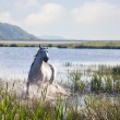 Gray Arab horse runs on water — Stock Photo #26862915