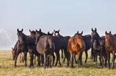 群马夏季绿色牧场上 — 图库照片