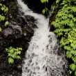 Stock Photo: Small falls in wild nature in tropics in rain