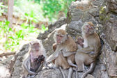 Family of monkeys sits on the rock — Стоковое фото