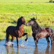 Stock Photo: Two beautiful horses