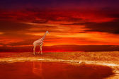 Giraffe on the bank of the lake — Stock Photo