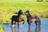 Two beautiful horses — Stock Photo