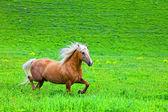 залив лошади ходили в электропастух — Стоковое фото