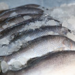 Fresh-caught sea fish — Stock Photo