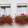 Wall with two windows decorated by flowerpots with red with flowers — Stock Photo