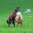 Two horses play — Stock Photo