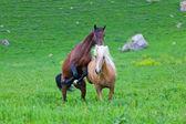 Two horses play — Stock Photo