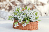 Greater basket with snowdrops in a snow — Stock Photo